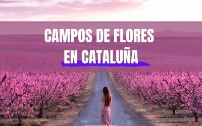 Dónde ver flores en Cataluña | Lavanda, Girasoles, Colza, Melocotoneros…