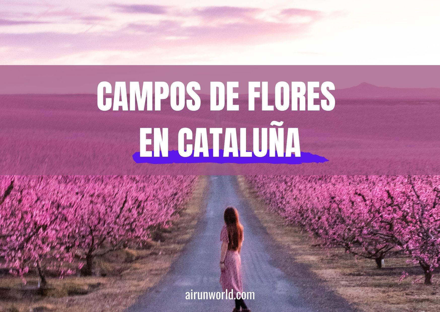 campos de flores en cataluña
